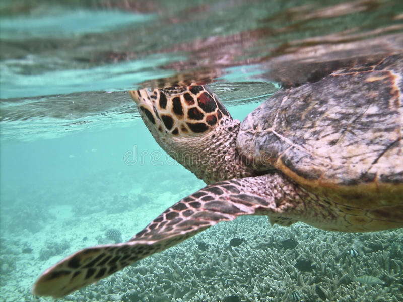 Schildpad en koraalrif royalty-vrije stock afbeeldingen