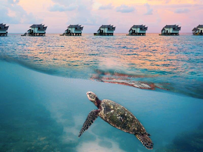 Schildpad en toevlucht, de Maldiven royalty-vrije stock afbeelding