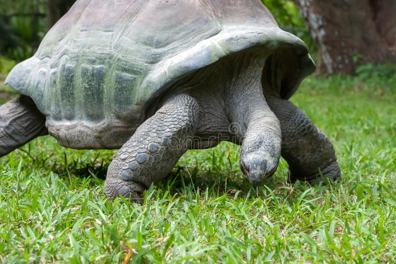 Schildpad in gras royalty-vrije stock afbeeldingen