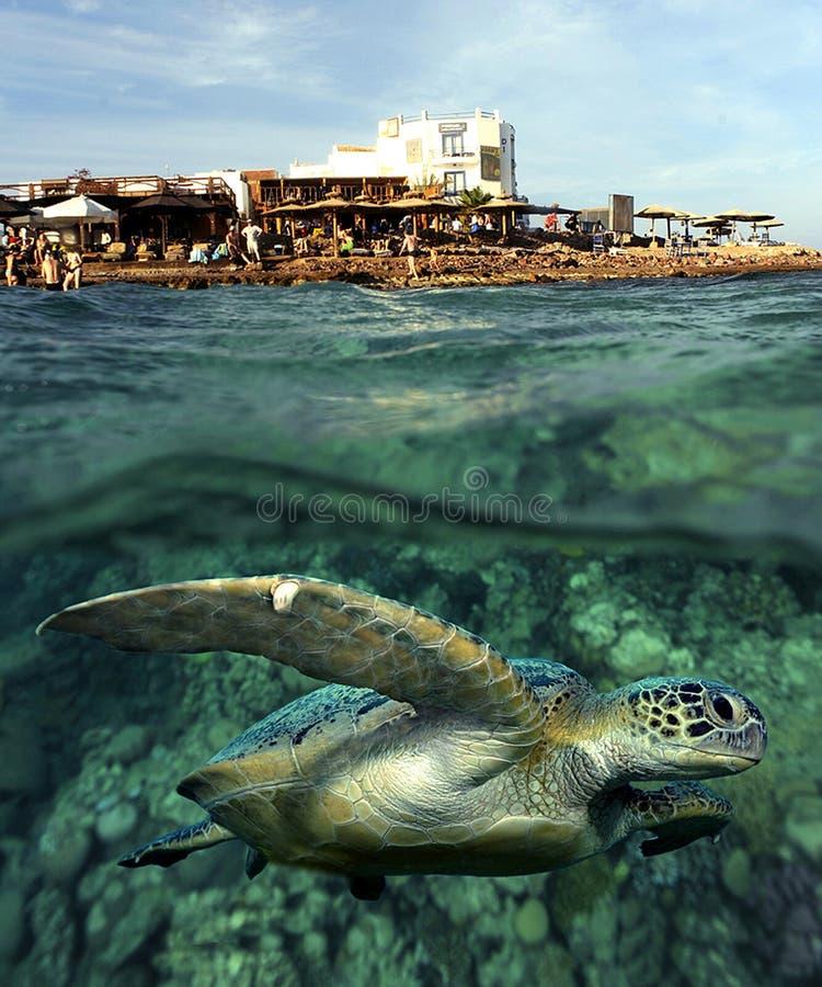 Schildpad in het Overzees royalty-vrije stock fotografie