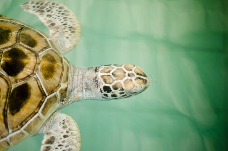 Schildpad in landbouwbedrijf stock afbeeldingen