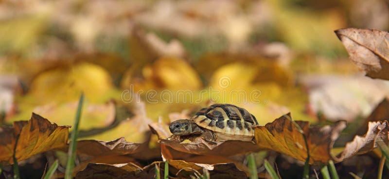Schildpad op bladeren stock foto's