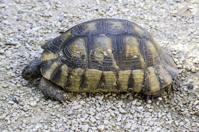 Schildpad op het land royalty-vrije stock afbeeldingen