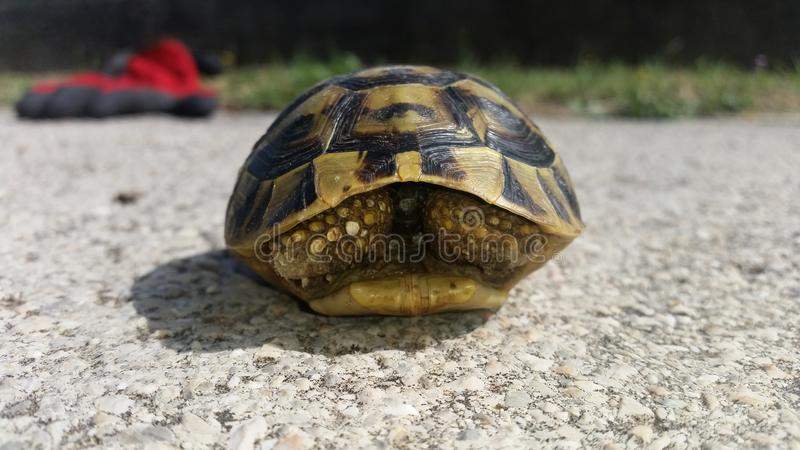 Schildpad op stedelijk gebied royalty-vrije stock foto's