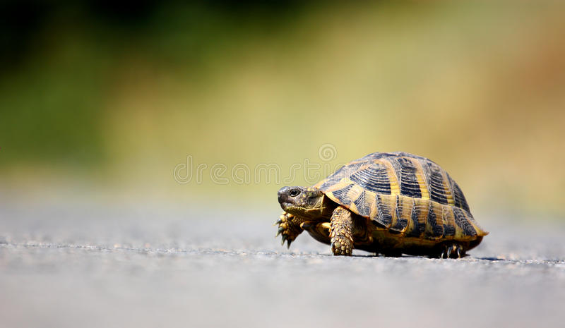 Schildpad openlucht stock afbeelding