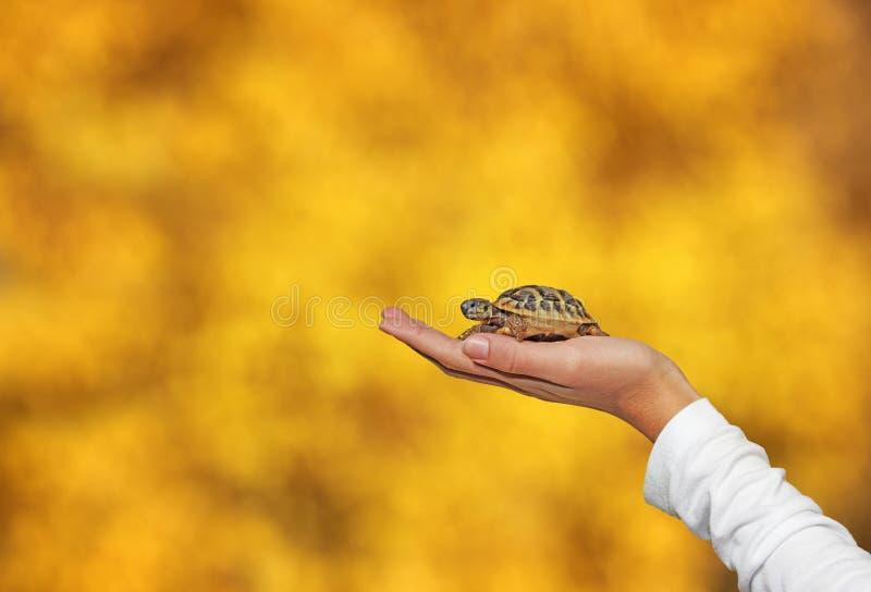 Schildpad in palm royalty-vrije stock foto