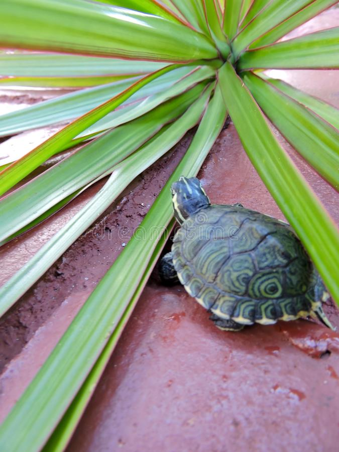 Schildpad in rood royalty-vrije stock afbeelding