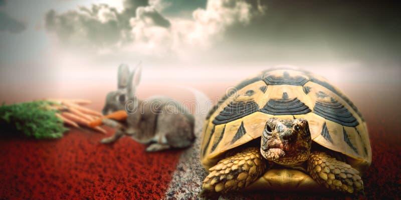 Schildpad versus konijnras Conceptuele kunst over zich het concentreren op uw doelstellingen royalty-vrije illustratie