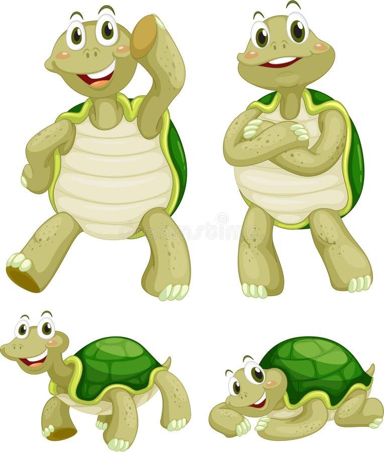 Schildpadden vector illustratie