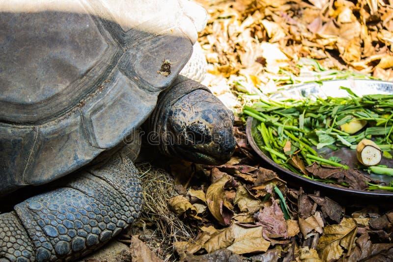 Download Schildpadden in Bangkok stock afbeelding. Afbeelding bestaande uit droog - 39117731