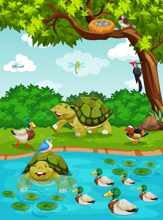 Schildpadden en eenden bij de rivier royalty-vrije illustratie