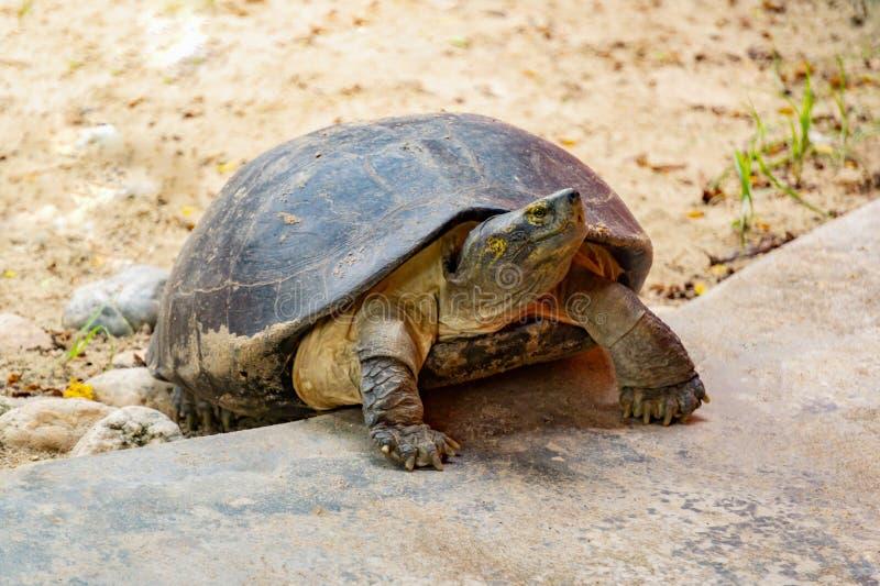 Schildpadden op de steen in de dierentuin royalty-vrije stock foto's