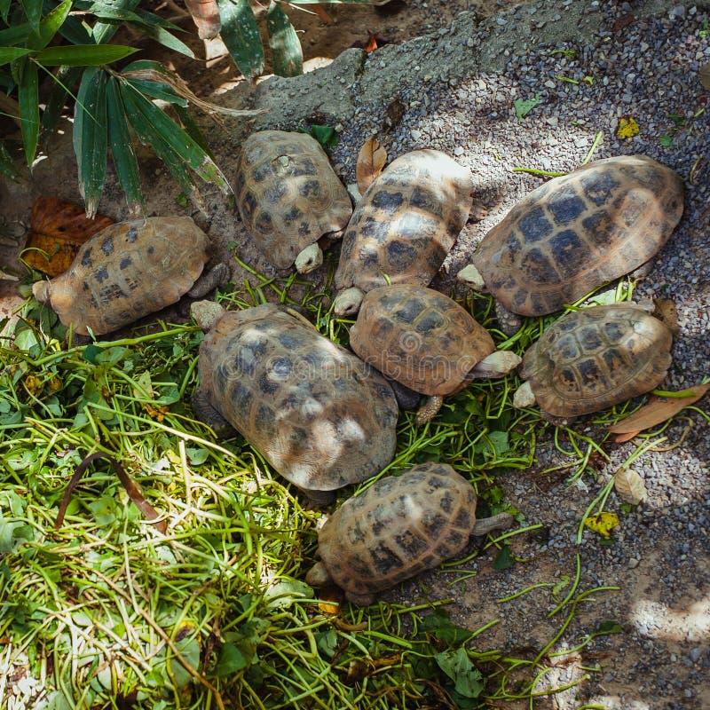 Schildpaddengroepen royalty-vrije stock foto's