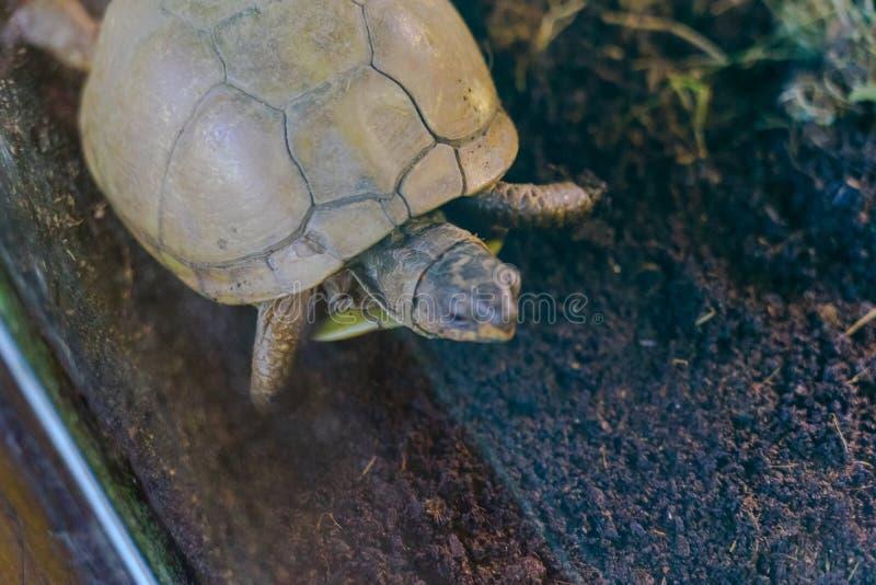 Schildpaddier, Levend organisme royalty-vrije stock fotografie
