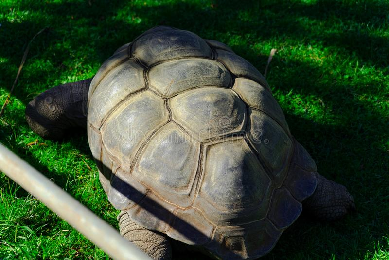 Schildpaddier, Levend organisme royalty-vrije stock foto