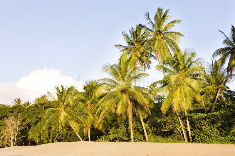Schildpadstrand, Tobago stock afbeelding