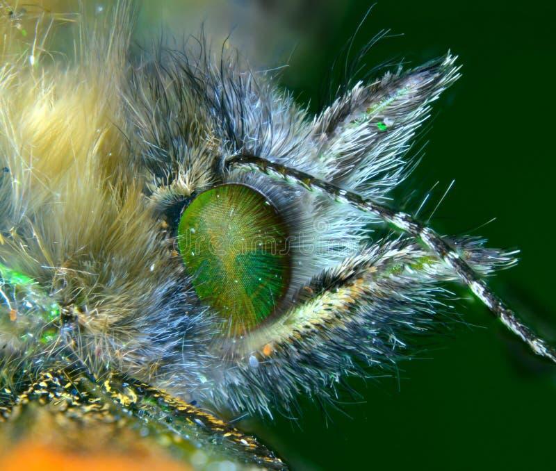 Schildpatt-Schmetterling stockbilder