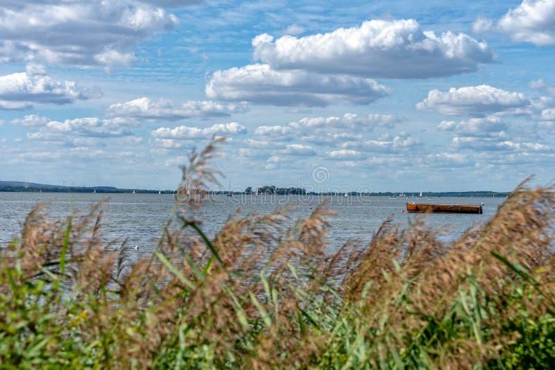 Schilfe auf dem Ufer des Steinhuder Meer stockfoto