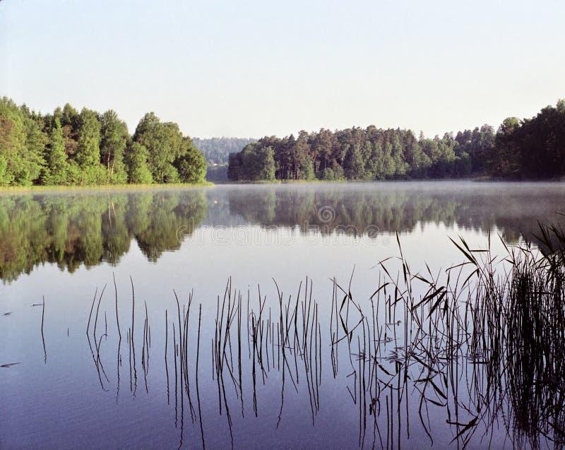 Schilfe auf einem See lizenzfreie stockbilder