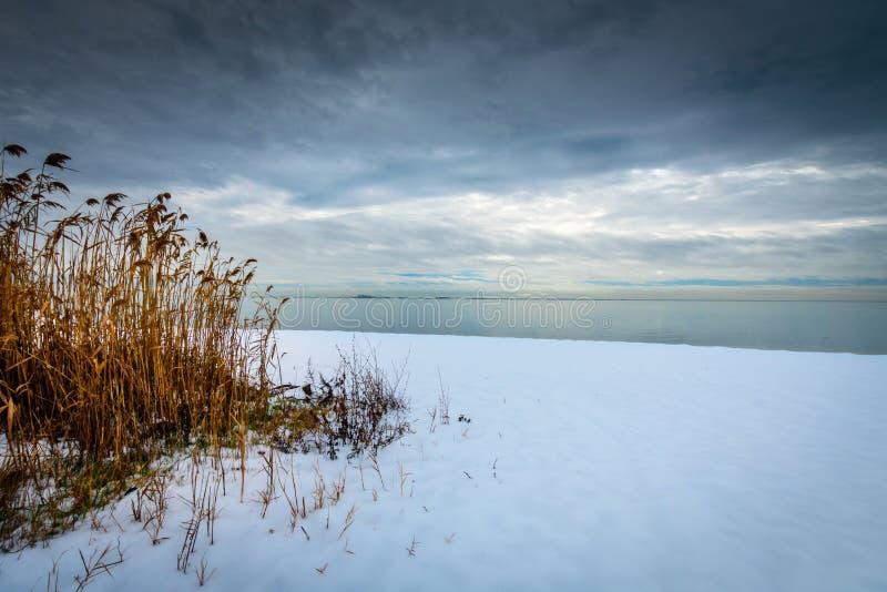 Schilfe auf einer schneebedeckten Küstenlinie stockfoto