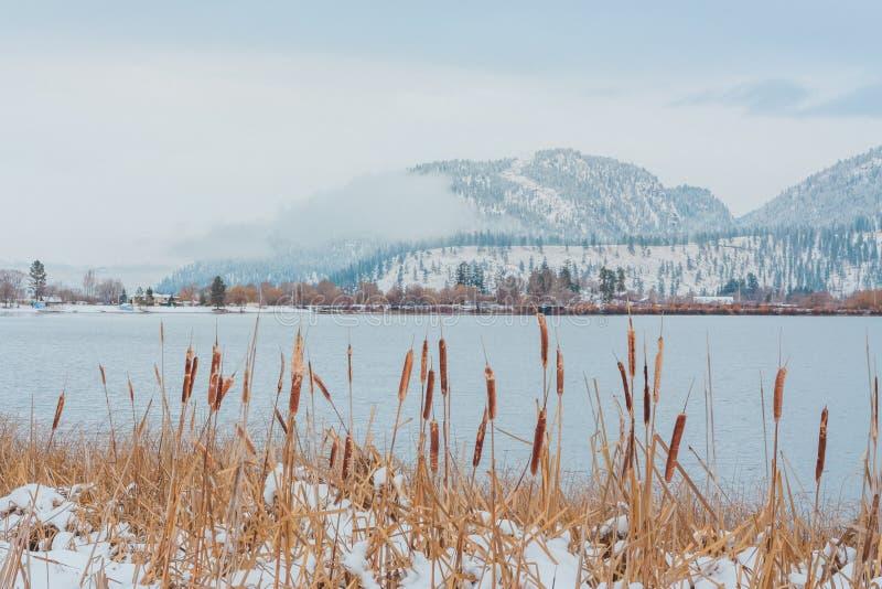 Schilfe durch hölzernen See im Winter stockbilder
