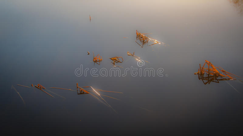 Schilfe im nebelhaften See lizenzfreie stockfotografie