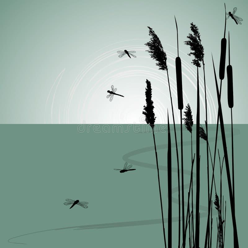 Schilfe im Wasser und in wenigen Libellen vektor abbildung