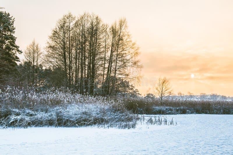 Schilfe im Winterfrost und -see lizenzfreie stockbilder