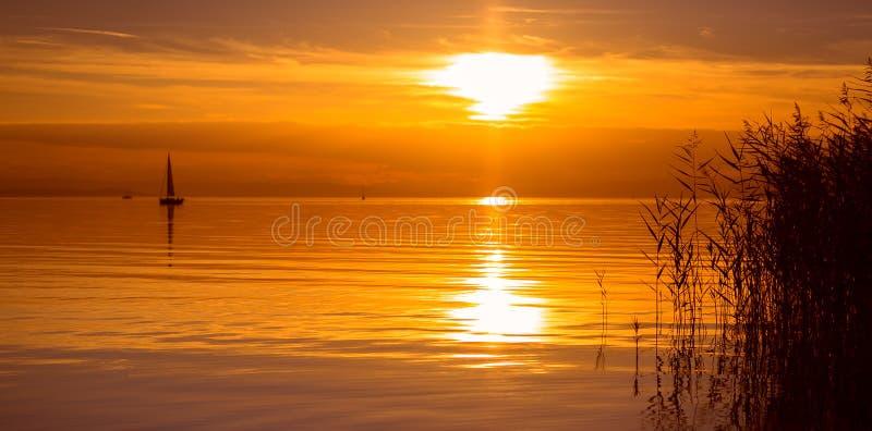 Schilfe und ruhiger See lizenzfreie stockfotografie