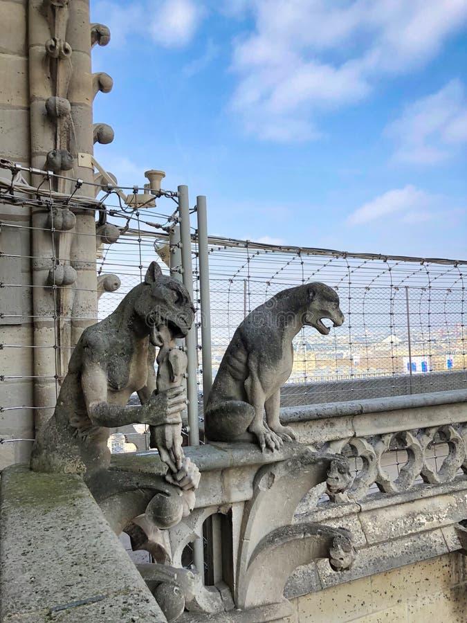 Schimärensteinstatuen auf dem Turm von Notre Dame-Kathedrale stockfoto