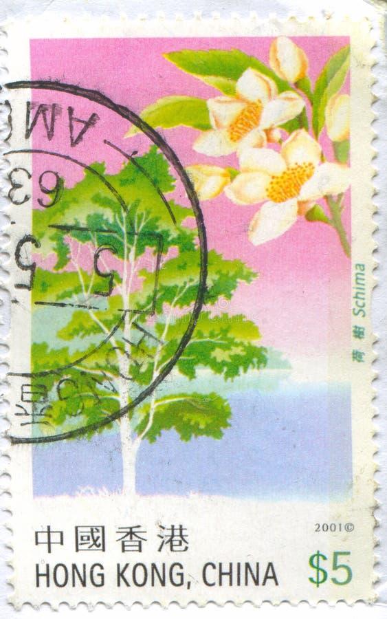 Schima-Baum stockfotografie