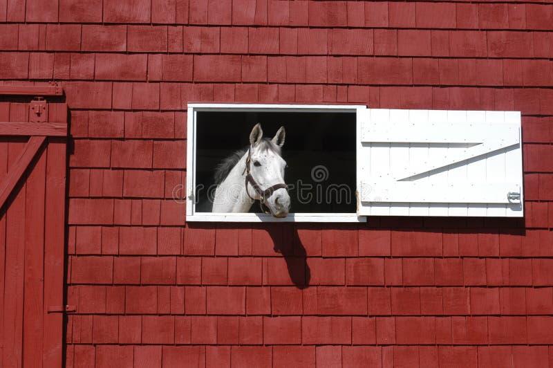 Schimmel, der aus rotem Scheunenfenster heraus schaut lizenzfreies stockfoto