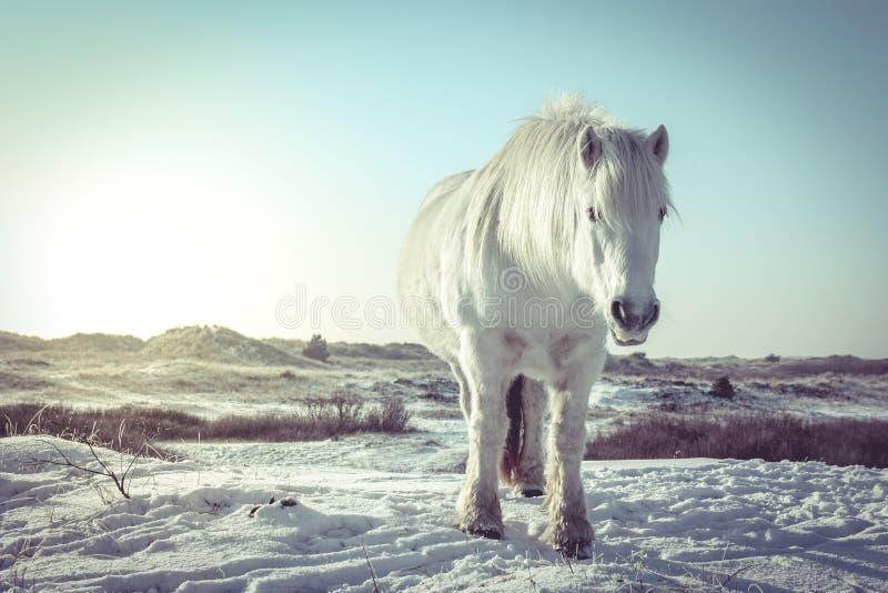 Schimmel im Schnee lizenzfreies stockfoto