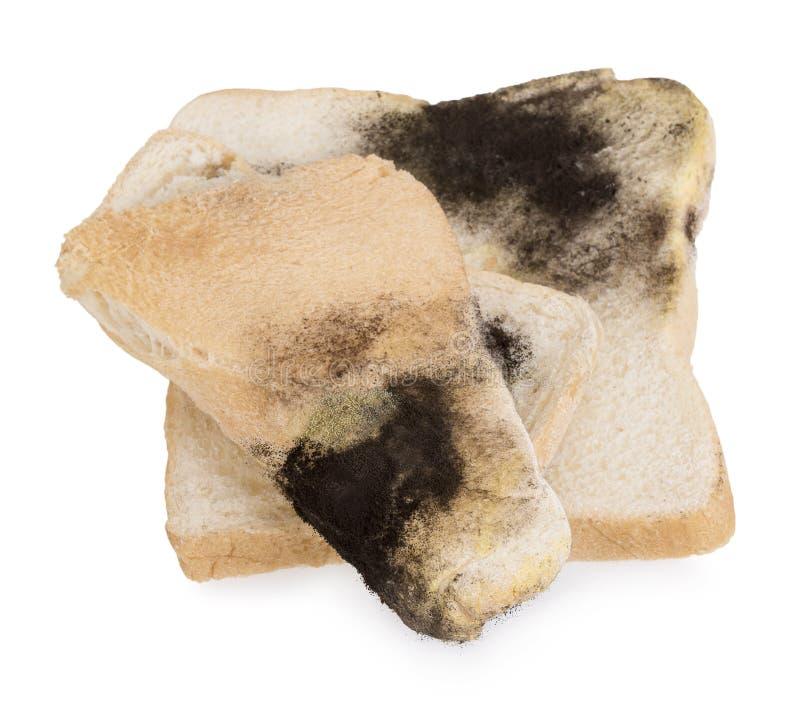 Schimmel op een boterham Oud brood stock fotografie