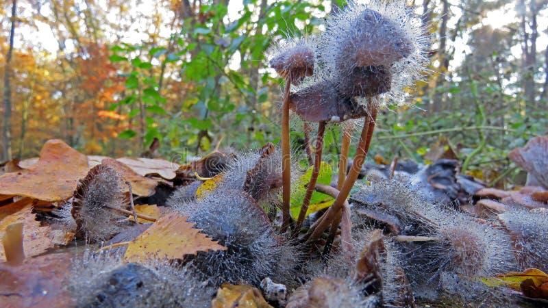 Schimmelbildung auf Pilz stockbild
