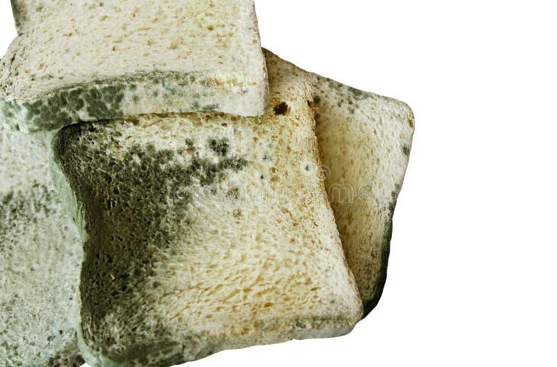 Schimmelig auf Brot auf weißem Hintergrund mit Kopienraum, ungenießbares Lebensmittel und abgelaufen stockfotografie