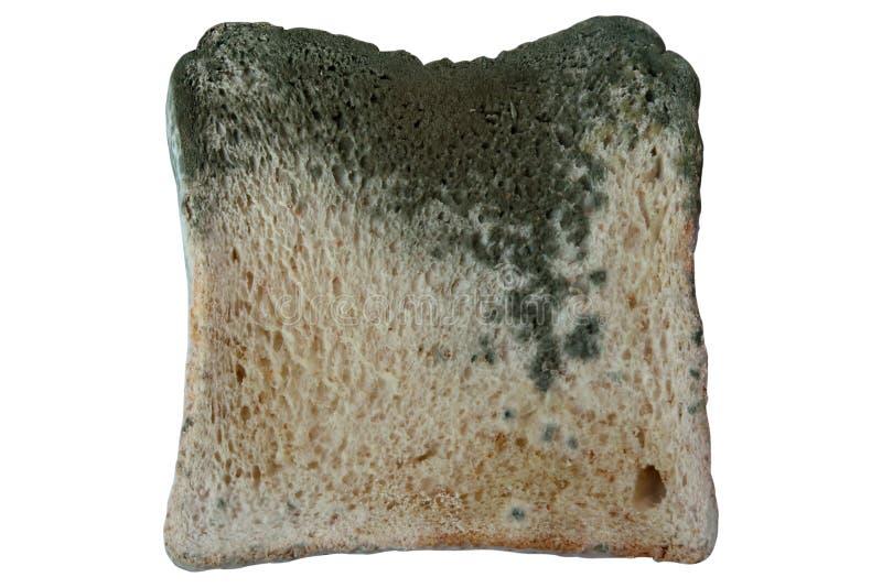 Schimmelig auf dem Brot lokalisiert auf weißem Hintergrund, ungenießbares Lebensmittel stockfoto