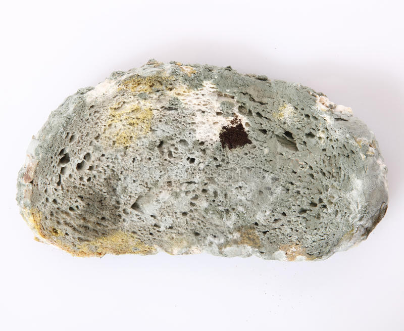 Schimmeliges Brot stockfotos