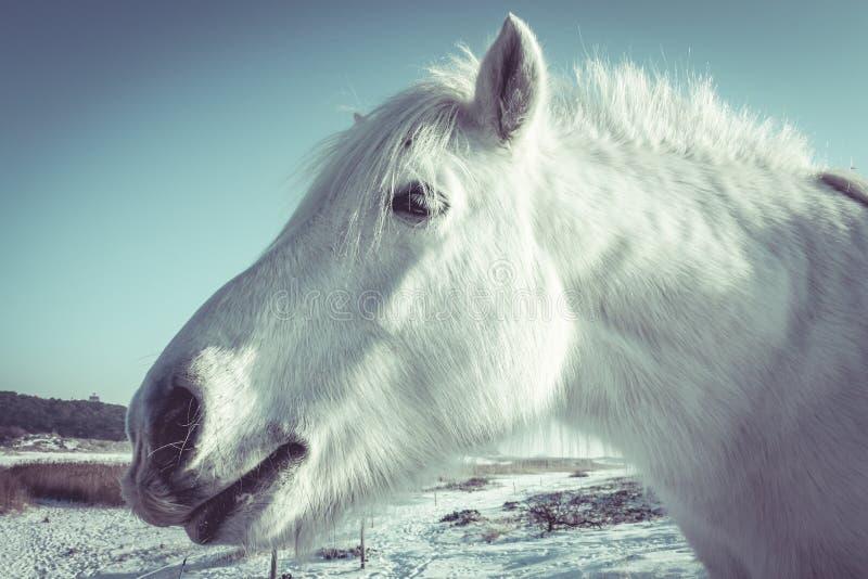Schimmelskopfnahaufnahme in der Winterzeit lizenzfreie stockbilder