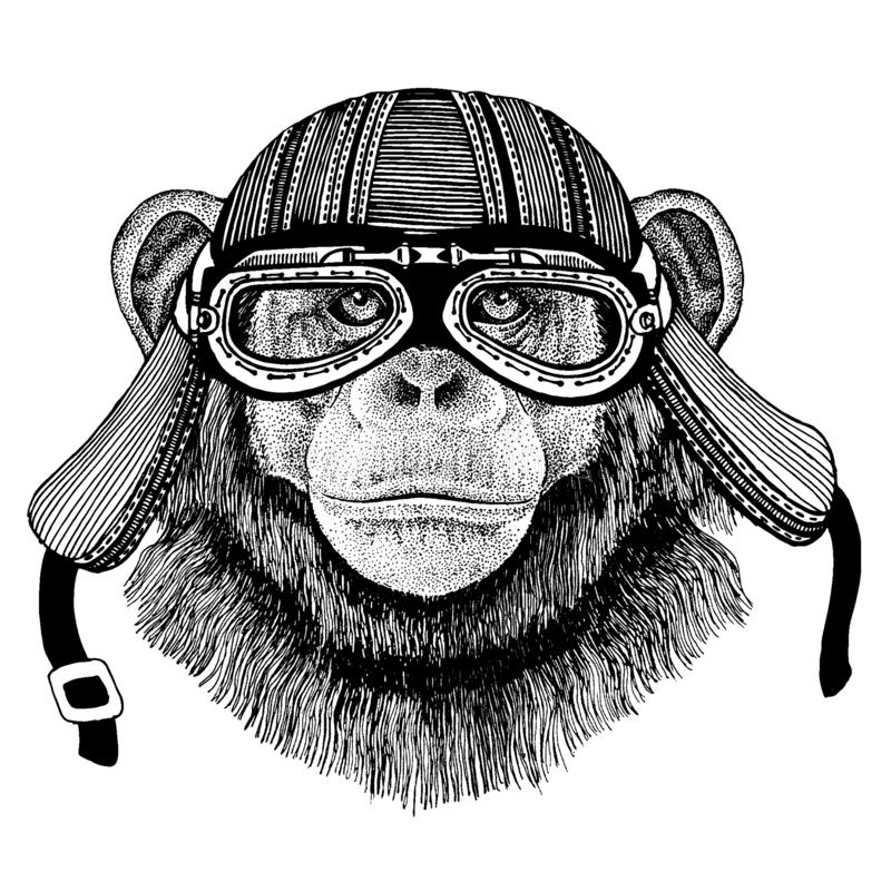 Schimpans för löst hjälm för motorcykel cyklistdjur för apa bärande Utdragen bild f?r hand f?r tatueringen, emblem, emblem, logo, royaltyfri illustrationer