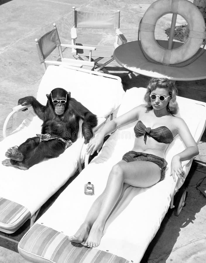 Schimpanse und eine Frau, die ein Sonnenbad nimmt (alle dargestellten Personen sind nicht längeres lebendes und kein Zustand exis stockfotografie