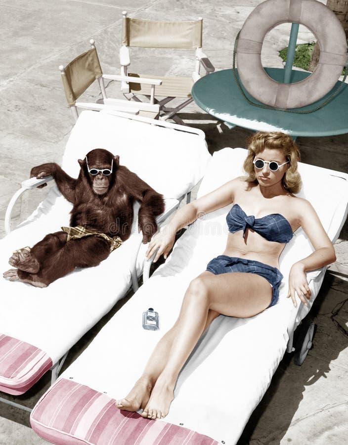 Schimpanse und eine Frau, die ein Sonnenbad nimmt (alle dargestellten Personen sind nicht längeres lebendes und kein Zustand exis lizenzfreies stockbild