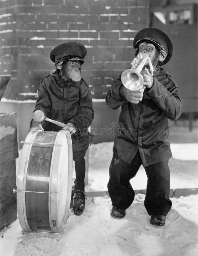 Schimpanser som spelar musik (alla visade personer inte är längre uppehälle, och inget gods finns Leverantörgarantier att det ska royaltyfria foton
