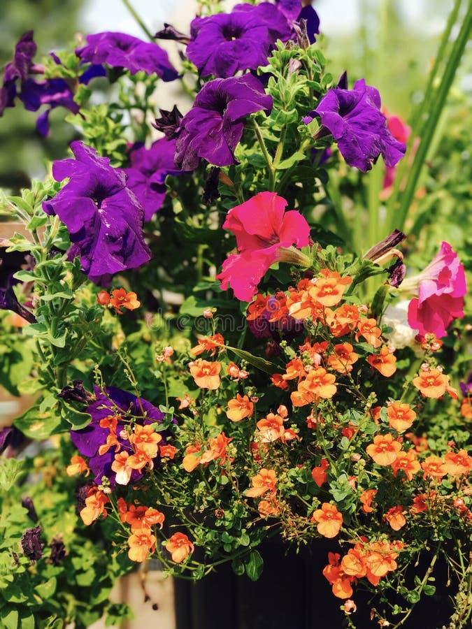 Schiocco di colore del fiore fotografia stock libera da diritti