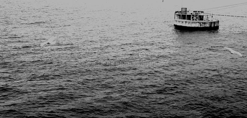 Schipmeertros, één als eiland op zee stock fotografie