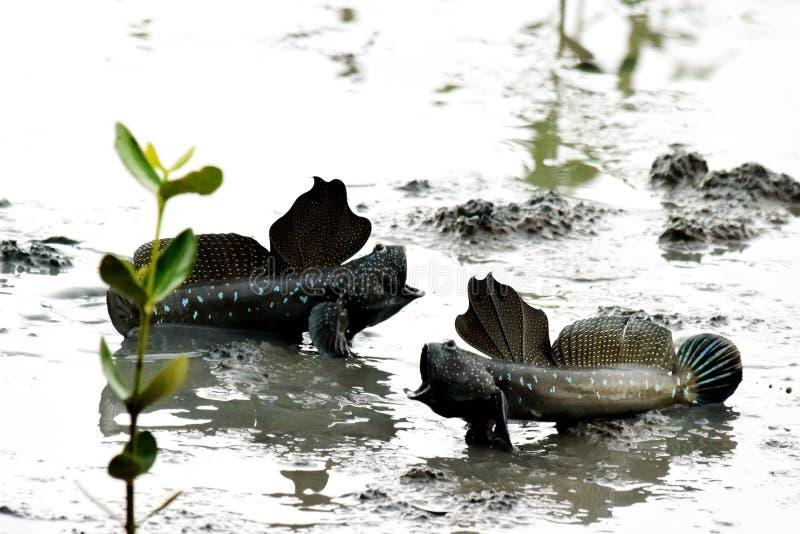 Schirmfischen kämpft lizenzfreies stockbild