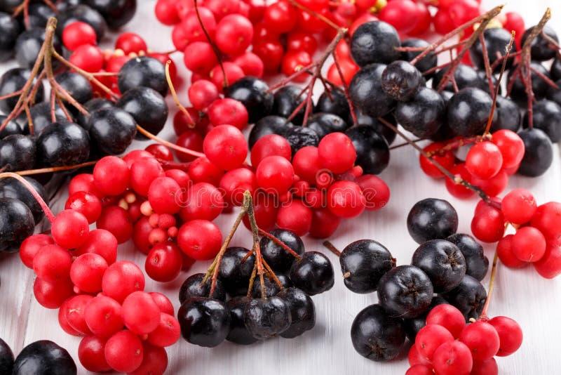 Schisandra chinensis o baya del cinco-sabor Aronia o chokeberry imagen de archivo libre de regalías