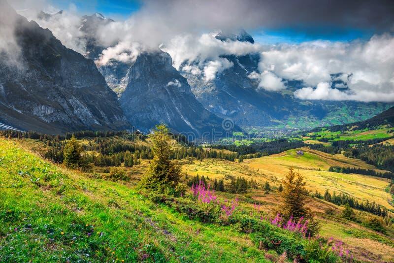 Schitterend berglandschap met de lente alpiene bloemen, Grindelwald, Zwitserland, Europa royalty-vrije stock foto's