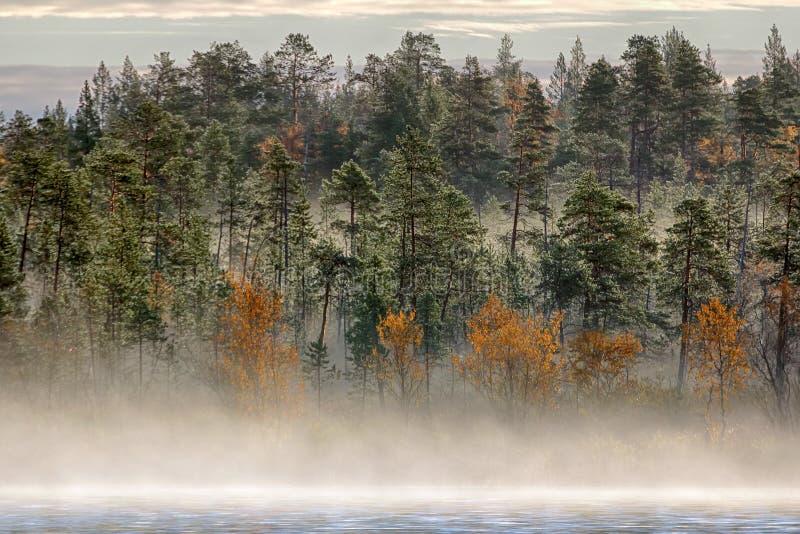 Schitterend de herfstlandschap met rivier en nevelig bos stock foto's