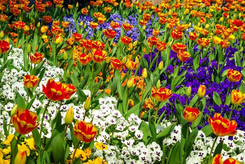 Schitterend gebied van verschillende bloemen in de Lente, zonnige tuin, close-up, details stock afbeeldingen